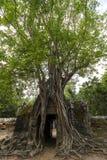 Δέντρο πέρα από το ναό σε Angkor Wat, Καμπότζη Στοκ Εικόνα