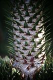 Δέντρο πίθηκος-γρίφων Στοκ φωτογραφία με δικαίωμα ελεύθερης χρήσης
