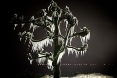 δέντρο παγακιών Στοκ Εικόνα
