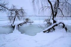 Δέντρο παγωμένου του ακτή ποταμού στο σούρουπο στοκ εικόνες με δικαίωμα ελεύθερης χρήσης
