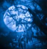 Δέντρο πανσελήνων Warewolf Στοκ φωτογραφία με δικαίωμα ελεύθερης χρήσης