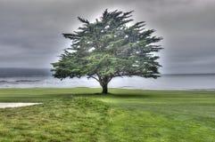 Δέντρο παραλιών χαλικιών Στοκ Εικόνες