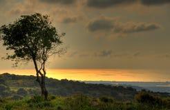 δέντρο παραλιών Στοκ φωτογραφίες με δικαίωμα ελεύθερης χρήσης