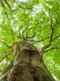 Δέντρο παραλιών Στοκ Εικόνα