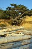 Δέντρο παραλιών Levitating Στοκ φωτογραφίες με δικαίωμα ελεύθερης χρήσης