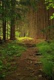 δέντρο παρόδων έλατου Στοκ εικόνες με δικαίωμα ελεύθερης χρήσης
