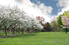 δέντρο παρόδων μήλων Στοκ φωτογραφία με δικαίωμα ελεύθερης χρήσης