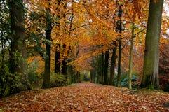 δέντρο παρόδων Στοκ φωτογραφία με δικαίωμα ελεύθερης χρήσης