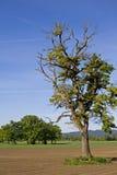 δέντρο πεδίων Στοκ εικόνες με δικαίωμα ελεύθερης χρήσης