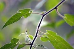 Δέντρο περιθωρίου Στοκ Φωτογραφία