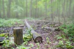 Δέντρο περικοπών στο δάσος Στοκ εικόνες με δικαίωμα ελεύθερης χρήσης