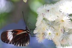 δέντρο πεταλούδων τροπικό Στοκ εικόνα με δικαίωμα ελεύθερης χρήσης