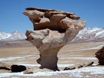 δέντρο πετρών Στοκ φωτογραφία με δικαίωμα ελεύθερης χρήσης