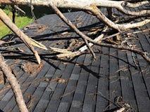 Δέντρο πεύκων αφορημένος τη στέγη Στοκ Φωτογραφίες