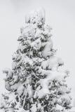 Δέντρο πεύκων κάτω από το χιόνι το χειμώνα Στοκ φωτογραφία με δικαίωμα ελεύθερης χρήσης