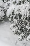 Δέντρο πεύκων κάτω από το χιόνι το χειμώνα Στοκ Φωτογραφία