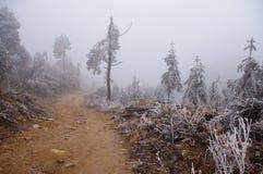 Δέντρο πεύκων μετά από το χιόνι Στοκ φωτογραφίες με δικαίωμα ελεύθερης χρήσης