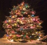 Δέντρο πεύκων με τα φω'τα Στοκ εικόνες με δικαίωμα ελεύθερης χρήσης