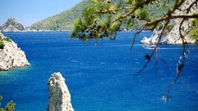 Δέντρο πεύκων με το μπλε υπόβαθρο Τουρκία θάλασσας απόθεμα βίντεο