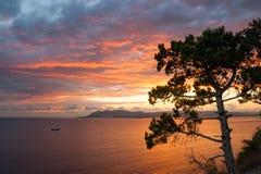 Δέντρο πεύκων πέρα από τη θάλασσα Στοκ Φωτογραφία