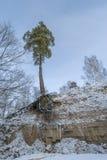 Δέντρο πεύκων πέρα από τον παγωμένο ποταμό Στοκ εικόνες με δικαίωμα ελεύθερης χρήσης