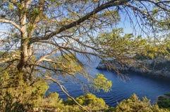 Δέντρο πεύκων σε έναν λόφο Στοκ φωτογραφία με δικαίωμα ελεύθερης χρήσης