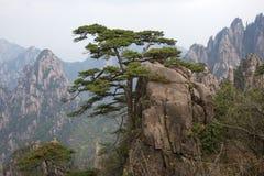 Δέντρο πεύκων στα βουνά Huangshan στην επαρχία Anhui, Κίνα Στοκ φωτογραφίες με δικαίωμα ελεύθερης χρήσης