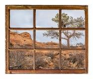 Δέντρο πεύκων στην άποψη παραθύρων απότομων βράχων sandstome Στοκ Εικόνες