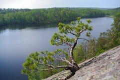 Δέντρο πεύκων στη δύσκολη ακτή της λίμνης μπλε σύννεφων πλήρες πράσινο τοπίο εστίασης πεδίων ημέρας οφειλόμενο λίγη μετακίνηση όχ Στοκ εικόνες με δικαίωμα ελεύθερης χρήσης