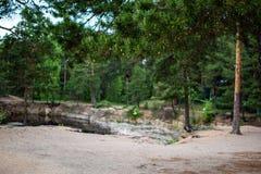 Δέντρο πεύκων στις μικρές προσκρούσεις πάρκων στοκ φωτογραφία με δικαίωμα ελεύθερης χρήσης