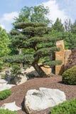 Δέντρο πεύκων στον ιαπωνικό κήπο Στοκ φωτογραφία με δικαίωμα ελεύθερης χρήσης