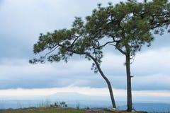 Δέντρο πεύκων στο λόφο ήρεμα του απότομου βράχου Στοκ Εικόνες