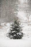 Δέντρο πεύκων στο μειωμένο χιόνι Στοκ εικόνα με δικαίωμα ελεύθερης χρήσης