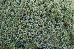 Δέντρο πεύκων στο πάρκο Στοκ Φωτογραφία
