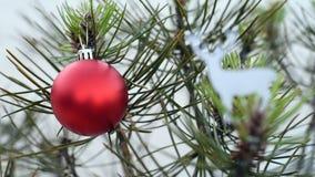 Δέντρο πεύκων Χριστουγέννων και κόκκινο μπιχλιμπίδι στη χειμερινή φωτογραφική διαφάνεια φιλμ μικρού μήκους
