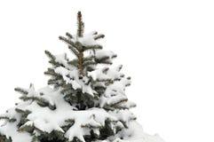 δέντρο πεύκων στοκ φωτογραφία με δικαίωμα ελεύθερης χρήσης