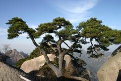 δέντρο πεύκων Στοκ φωτογραφίες με δικαίωμα ελεύθερης χρήσης