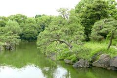 Δέντρο πεύκων thunbergii πεύκων και λίμνη κήπων Στοκ φωτογραφίες με δικαίωμα ελεύθερης χρήσης