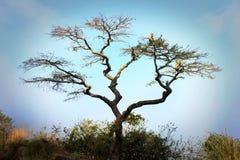 Δέντρο πιθήκων Στοκ Εικόνες