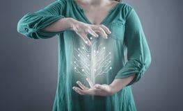 Δέντρο πινάκων κυκλωμάτων στοκ εικόνα με δικαίωμα ελεύθερης χρήσης