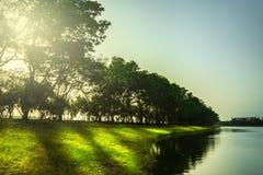 Δέντρο ποταμών από την ακτή ποταμών Στοκ Εικόνες