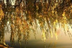 Δέντρο ποταμών Στοκ εικόνες με δικαίωμα ελεύθερης χρήσης