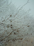 δέντρο πουλιών στοκ φωτογραφία