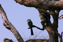 δέντρο πουλιών στοκ φωτογραφία με δικαίωμα ελεύθερης χρήσης