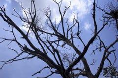 Δέντρο που αντιμετωπίζεται απολύτως από κάτω από με το μπλε ουρανό Στοκ εικόνα με δικαίωμα ελεύθερης χρήσης