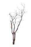 Δέντρο που απομονώνεται νεκρό Στοκ φωτογραφία με δικαίωμα ελεύθερης χρήσης