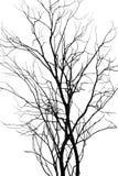Δέντρο που απομονώνεται ξηρό Στοκ εικόνες με δικαίωμα ελεύθερης χρήσης