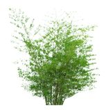 Δέντρο που απομονώνεται σε ένα άσπρο υπόβαθρο με το ψαλίδισμα της πορείας στοκ εικόνες