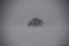 Δέντρο που απομονώνεται χειμερινό από την επίγεια χιονοθύελλα Στοκ Εικόνα