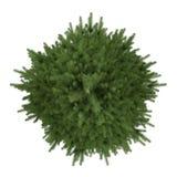 Δέντρο που απομονώνεται. Picea fir-tree κορυφή Στοκ φωτογραφία με δικαίωμα ελεύθερης χρήσης